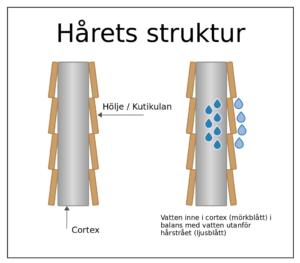 Hårets struktur